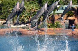 Seaworld's Dolphin Cove and Marine Stadium, Main Beach – Gold Coast