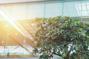 eco building or green office plant tree and garden in city concept