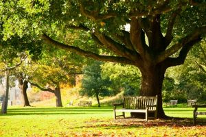 A bench under a tree in the Royal Botanic Gardens.